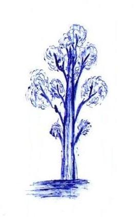[تصویر:  tree.jpg]